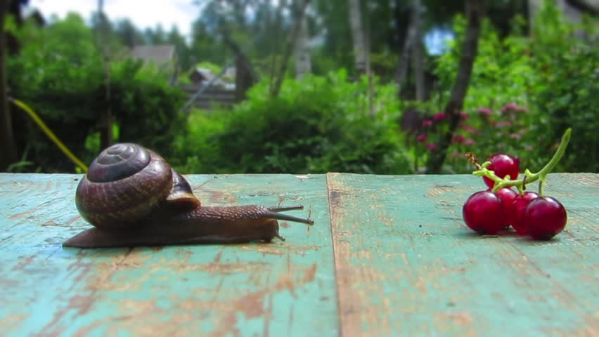 Time lapse snail close up trips to tasty aim