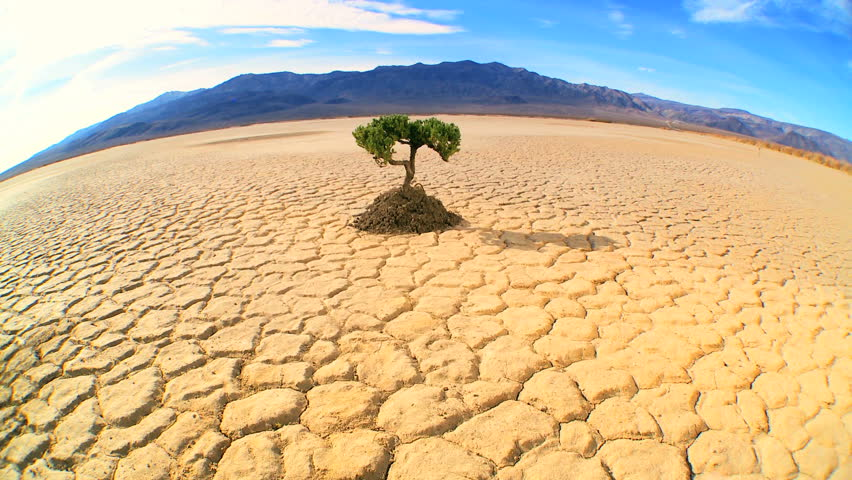 Concept climate change shot of green tree growing in barren desert landscape in wide-angle - HD stock video clip