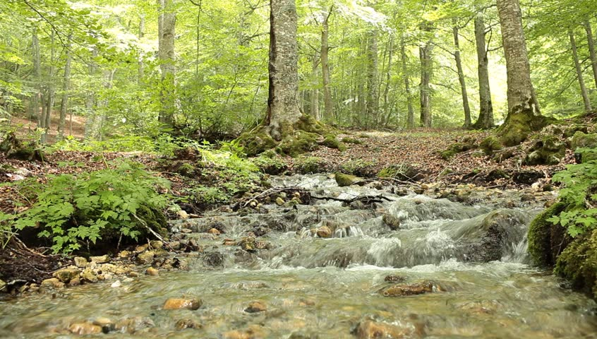 Video of small waterfall situated in the beech Fonte Romana on the western side of the massif of the Majella in the Abruzzi, Italy.