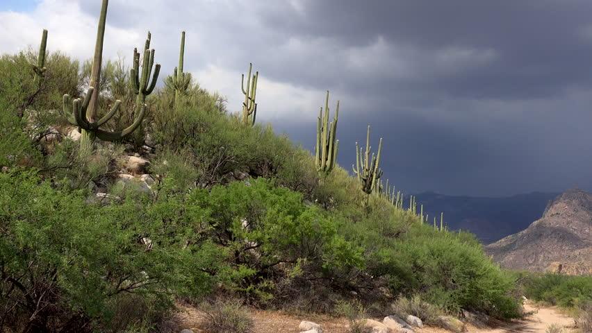 4K Time Lapse, Storm clouds slowly engulf sky over saguaro cactus hillside in Arizona desert landscape scenic. 4K UHD 3840x2160