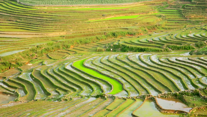 Gorgeous farm fields rice paddy terraces sapa vietnam for Terrace cultivation meaning