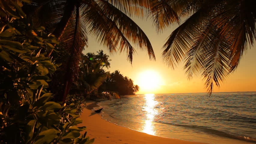 Tropical Island Sunset: Two Palms On Beautiful Tropical Beach Stock Footage Video