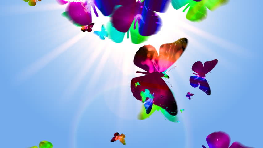 Seamless butterfly loop background - HD stock footage clip