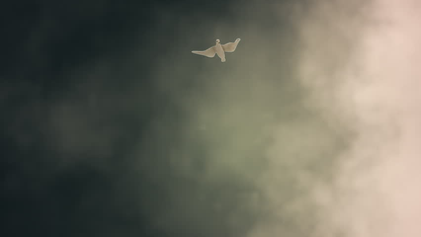 White Dove Descending Among Light Rays