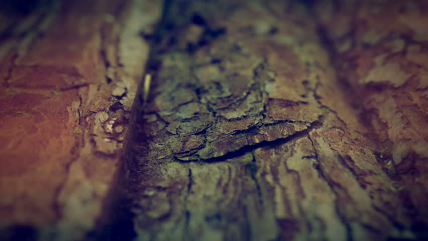 Wooden log background texture HD Stock Footage. A sliding shot of the surface of wooden logs.