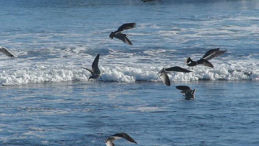 Flock of birds flying above the ocean waves.