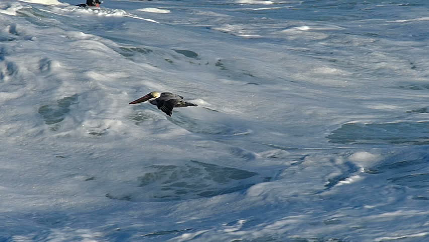 A group of Pelican birds flying low in slow motion above a wave in the Pacific Ocean off of the coast of California, USA.