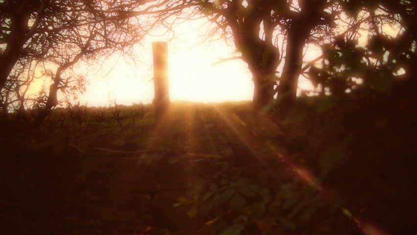 Fall/Autumn golden Sunshine over an open field HD stock footage. A low Sun casting it's golden light rays in a Rural area.