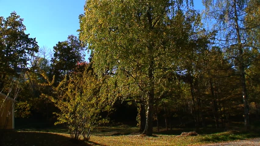 Autumn colors in the nature - HD stock video clip