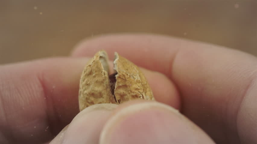 Close up macro shot of a man cracking open the shell of a roasted peanut.