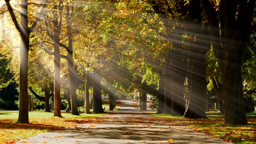 tree alley park background. sun rays shining through forest trees. autumn scenery