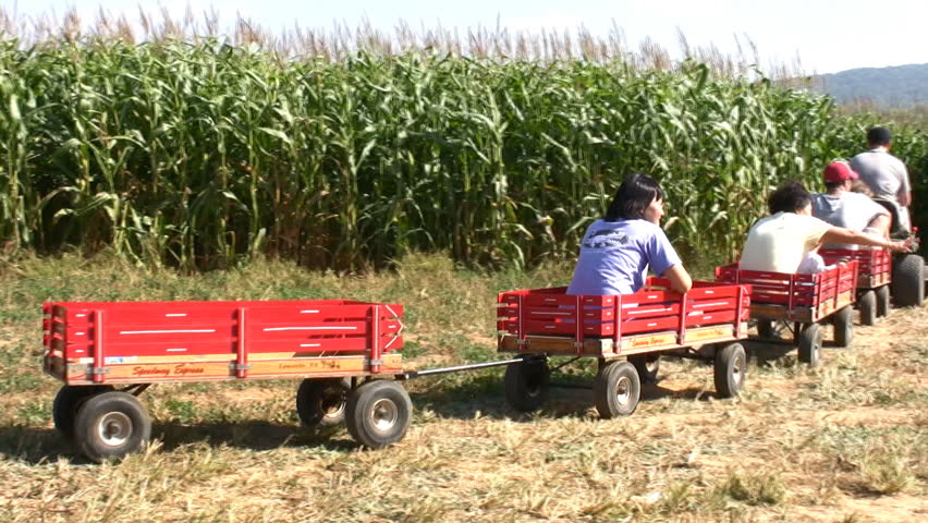 Tractor Pulled Wagon : Hd wagons are pulled by a tractor into the cornfields