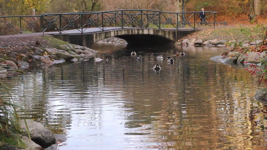 1920x1080 cabin lake ducks - photo #14