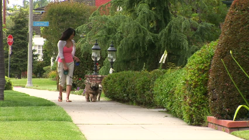 Young woman walking dogs - HD stock footage clip