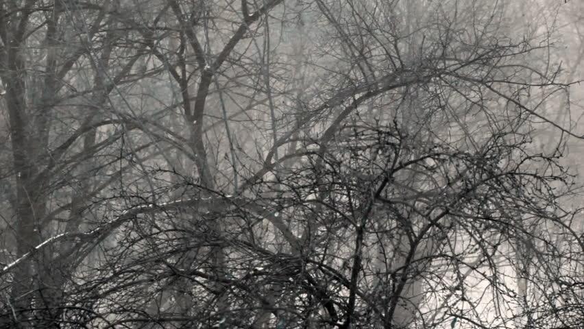 Snow storm. - HD stock video clip