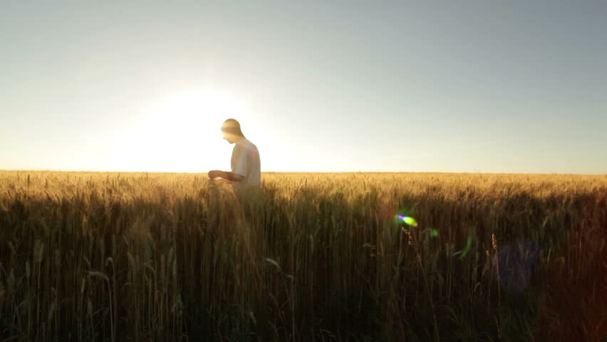 farmer in huge wheat field at sunshine  - HD stock video clip