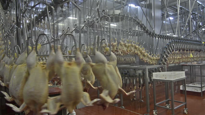Chicken meat production