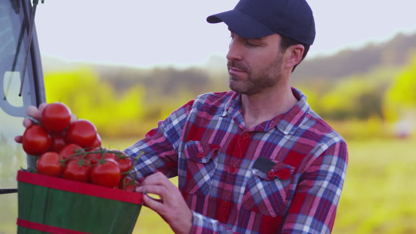 Farmer looking at basket of tomatoes