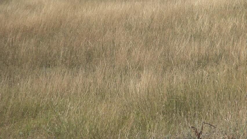Desert. Arid landscape in a plain area in wind blowing. Dry season.   Shutterstock HD Video #9439700
