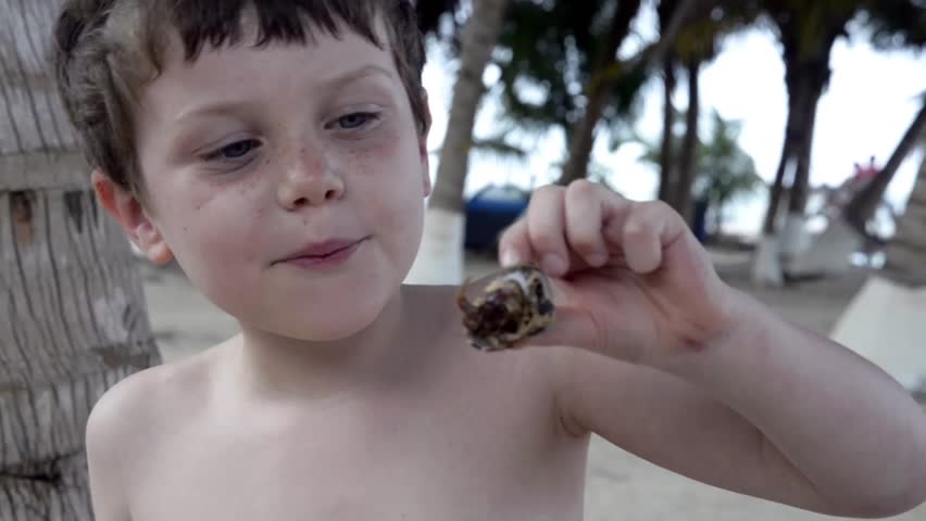 Cute young boy plays with crab in shell on Caribbean island during family holiday