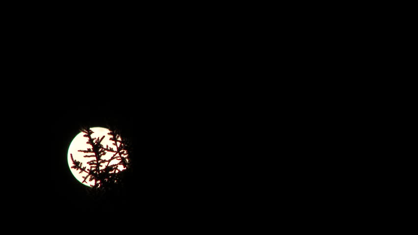 4K Full moon rising at night behind evergreen trees time lapse. | Shutterstock HD Video #9503204