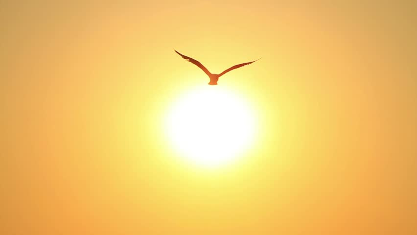 Summertime, Slow motion. Seagulls flying into the sky towards the sun.