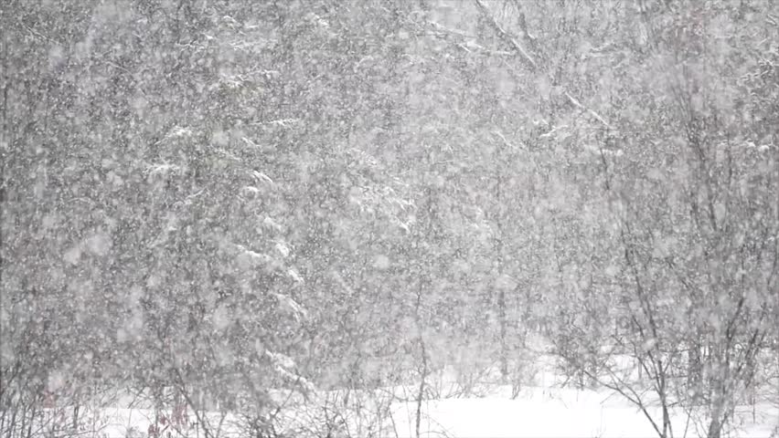 Snow Falling In Slow Motion Against A Forest Background Of Trees In A Rural Setting, Another Snowfall Of Winter In Canada