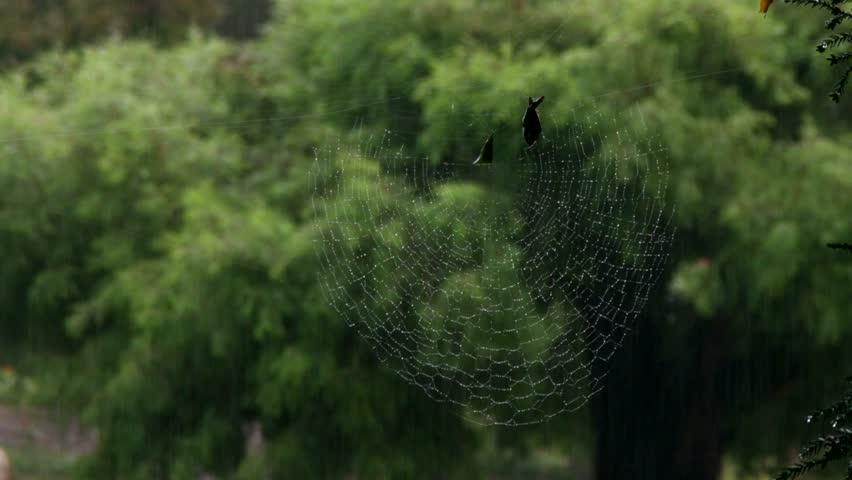 Leaf curling spider web background in rain
