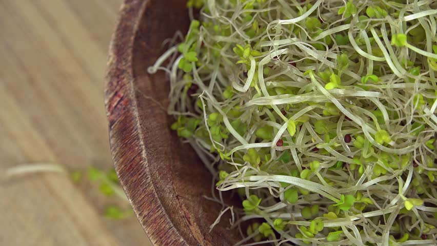 Portion of Broccoli Sprouts (seamless loopable 4K footage)