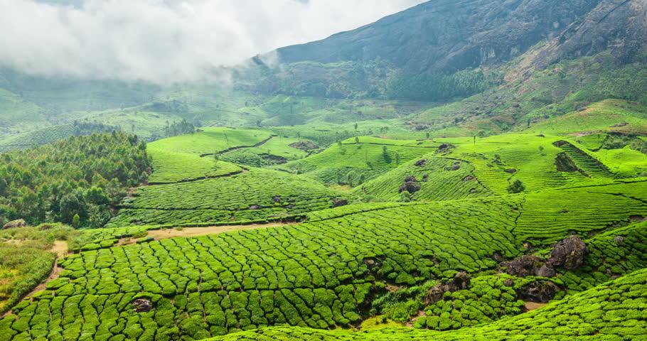 4k Timelapse of green tea plantations in Munnar, Kerala, India with pan