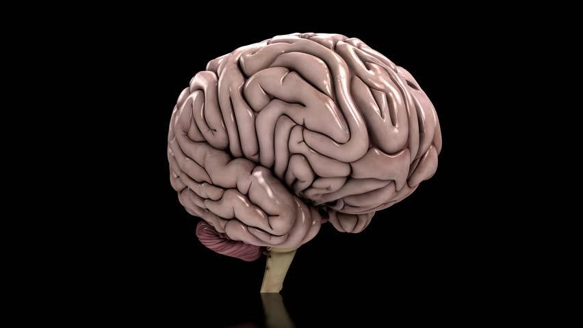 Animated human brain - photo#34