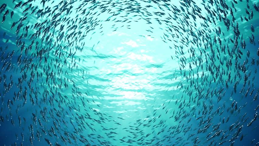 School of fish | Shutterstock HD Video #9743549