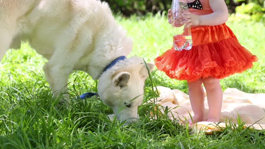White dog husky drinks and little girl holds bottle in park at summer sunny day