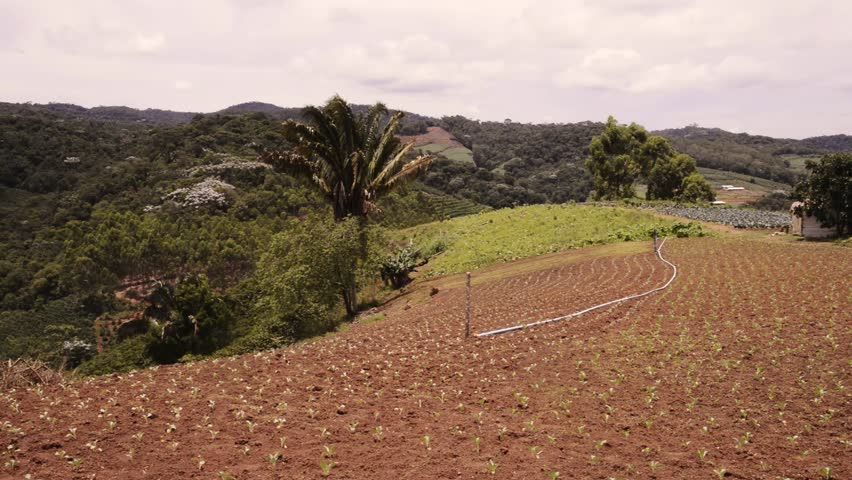 Crops of a plantation at the margins of the Atlantic Forest in Espirito Santo, Brazil. - HD stock video clip