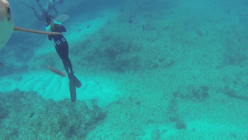 Beautiful full HD footage of curious Caribbean reef sharks (Carcharhinus perezii) in the Bahama's - HD stock video clip