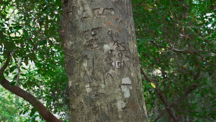 Initials carved in tree trunk - HD stock video clip